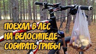 Поехал в лес на велосипеде собирать грибы | Влог