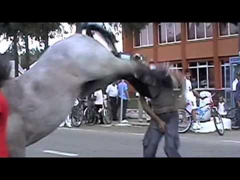 Donkey kicks gif