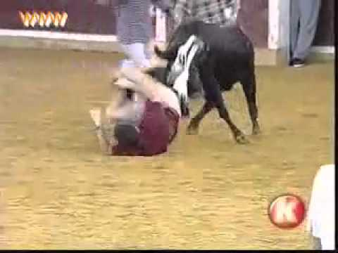 Smiješna nezgoda s bikom
