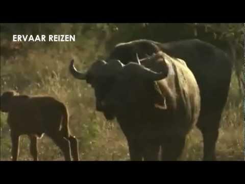 Ervaar Reizen – Rondreis safari Zuid-Afrika Wildlife