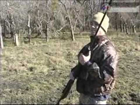 airgun pig hunting