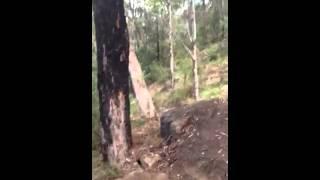 Knapsack Stringline Downhill trail overview