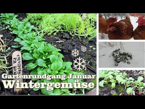 Wintergemüse Feldsalat, Pflücksalat, Sellerie Und Radischen Zeige Ich Im Gartenrundgang Januar