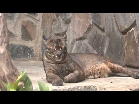 Один из лучших зоопарков мира- Зоопарк Хошимина во Вьетнаме ( zoo saigon)