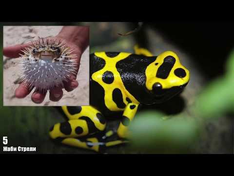 Топ 15 Най-отровни животни