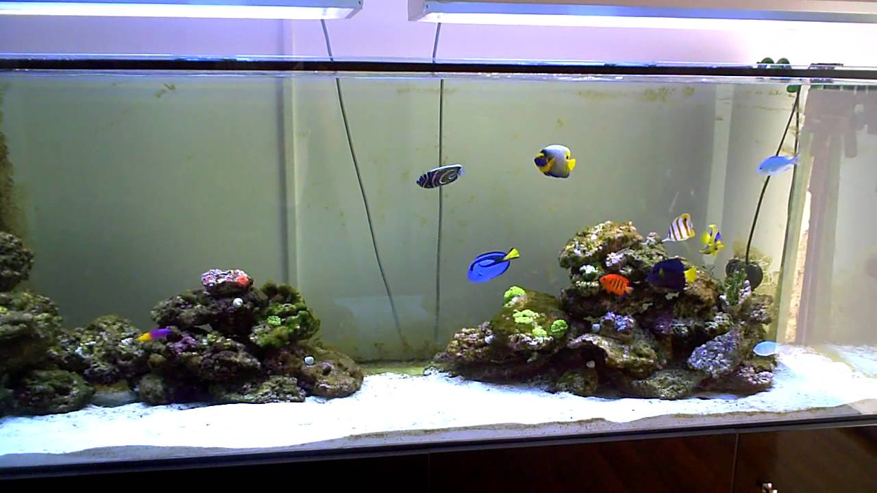 Aquarium 60l pas cher 28 images 17 best ideas about for Aquarium meuble pas cher