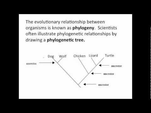 phylogenetic tree. Black Bedroom Furniture Sets. Home Design Ideas