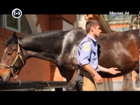 Познавательный фильм: московская конная полиция