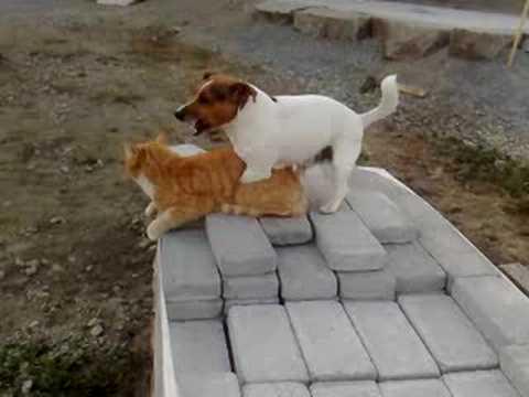 hund knullar kvinna frun knullar