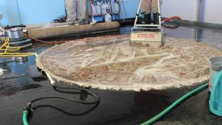 Highly soiled and Loaded with Urine Area Rug In Process of Cleaning (#10-7048) MVI 7048