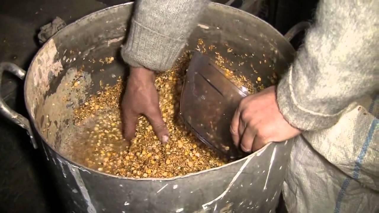 как запарить пшеницу для рыбалки в мультиварке