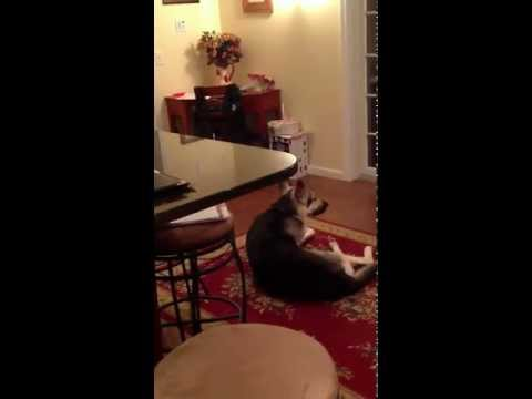 Who Knew the Dog Could Sing?