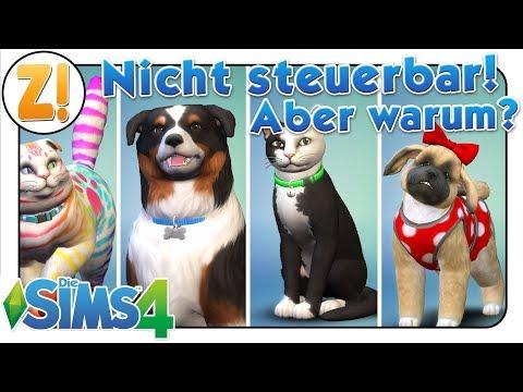 Sims 4 Entwicklertagebuch: Warum wir die Tiere nicht direkt steuern können | HUNDE UND KATZEN
