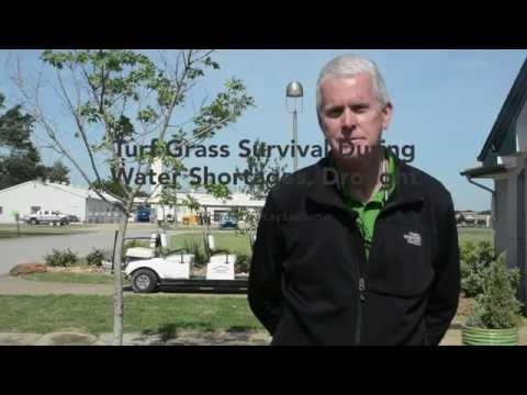 Turf survival during drought, water shortages