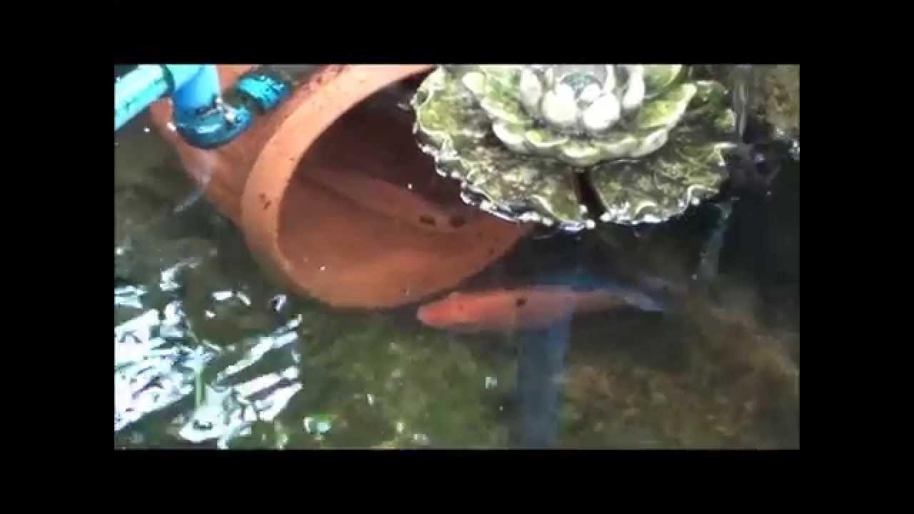 Aquaponics philippines how to king fish breeding made for Breeding pond fish