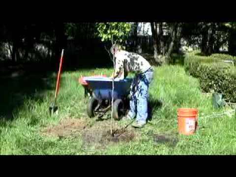 Planting America:How To Plant a Tree (Feat. Rob Beideman)