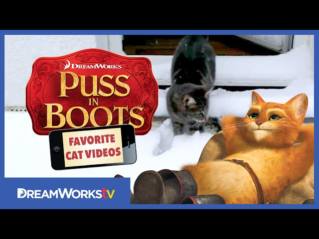 Cat Meets Snow | PUSS IN BOOTS FAVORITE CAT VIDEOS