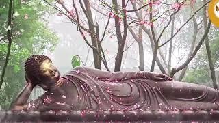 PHẬT ƠI, CON ĐÃ TRỞ VỀ .... (Thầy THÍCH MINH QUANG - Chùa Địa Tạng Phi Lai, Hà Nam)