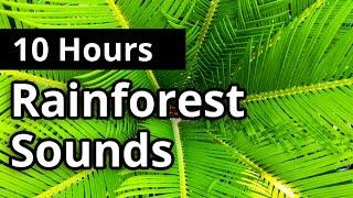 Rainforest Sounds 10 HOURS - Natural Sleep Sounds - Relaxation - Meditation