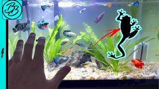 NEW Aquarium PET ESCAPES EVERYTHING!!