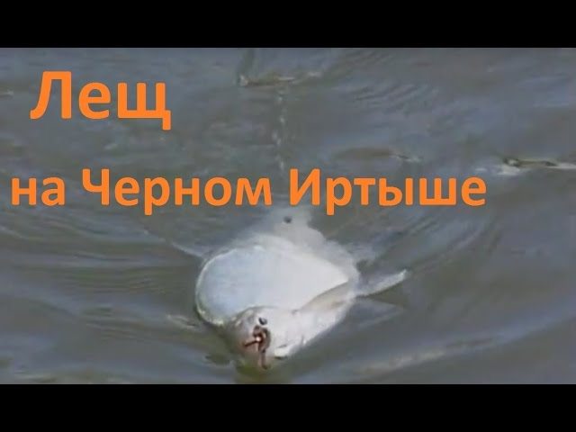 диалоги о рыбалке видео-линь