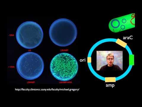 AP Biology Lab 6: Molecular Biology