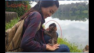 Beautiful baby monkey Bree like human, Good relationship cute baby monkey & human