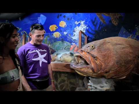 ... Marta, Acuario Y Museo Del Mar Rodadero Aquarium and Museum of The Sea