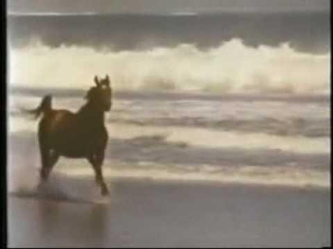 horses - no reins