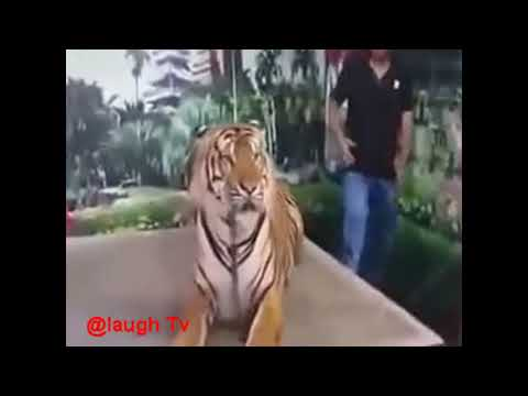 Whatsapp Most Viral Funny Videos 2017 Funny Pranks Try Not To Laugh Challenge mp4