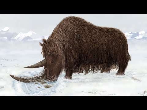 Woolly rhinoceros is listed (or ranked) 24 on the list The Top 100 Weirdest, Most Amazing Creatures Ever On Earth