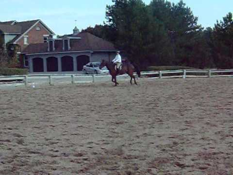 Havencrest Schooling Show