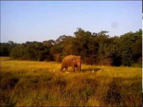 Dangerous Elephant  in Wasgamuwa Sri Lanka