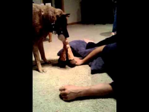 Dog And Father Bonding Time video