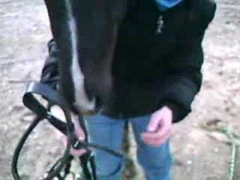 A Better way to Bridle Your Horse