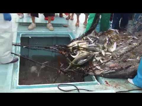 定置網漁の見学