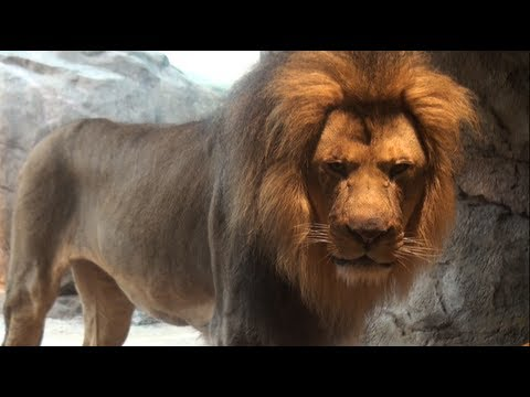 Milwaukee County Zoo - Insider Perks Travel Video