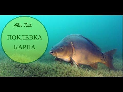 ловля карпа подводные съемки рыбалка