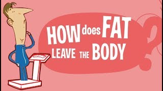 How Does Fat Leave the Body? Where does the fat GO?