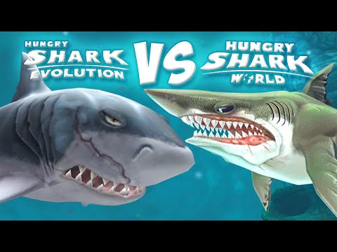 Something Ate This Sharkbut What  YouTube