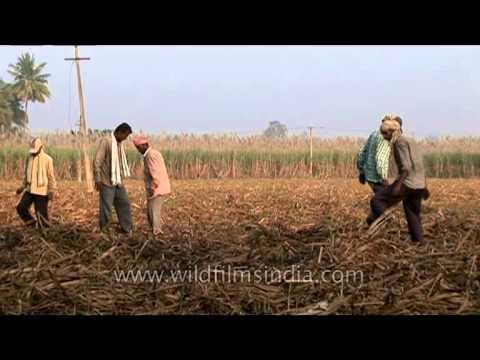 Farmers of karnataka state, India