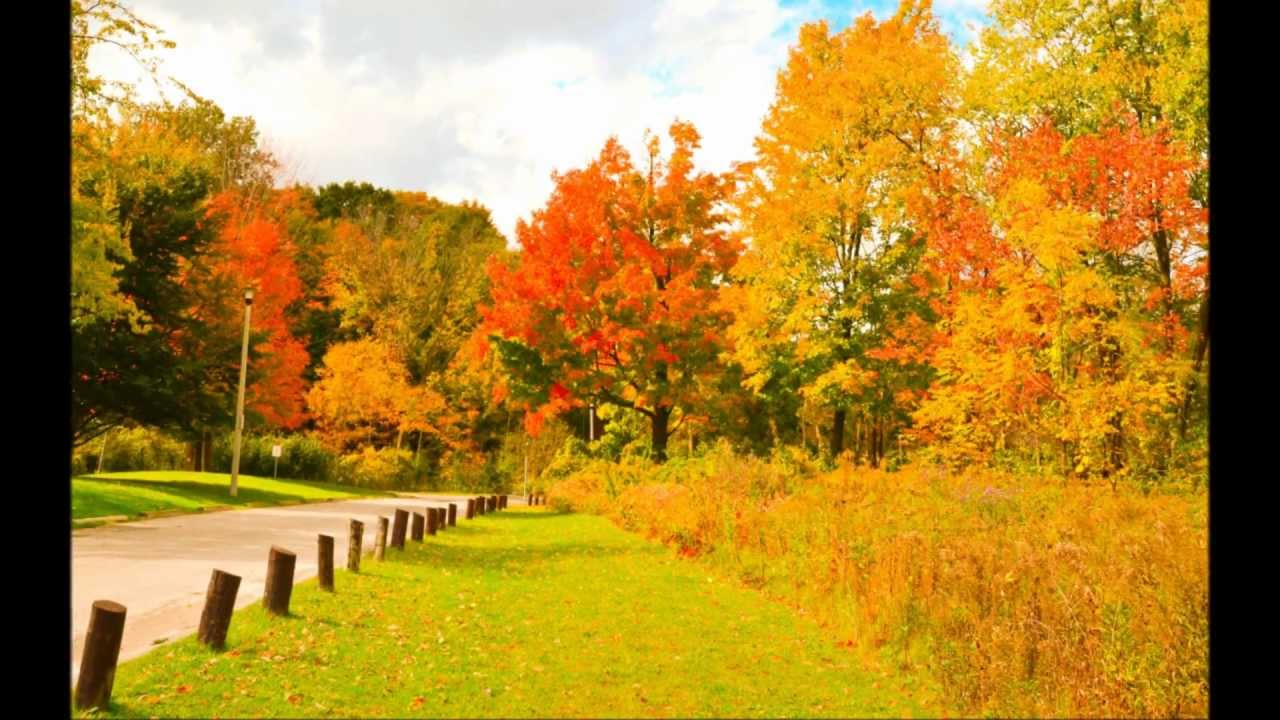 Pictures Of Autum: 2012 (By Paul Macwan)