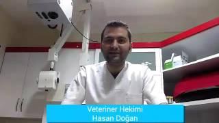 Veteriner Hekimine Soru Sor, Soru cevap,Soru sormak istiyorum,Online veteriner danışma