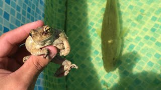 TREE FROG GETS  Eaten By Giant BASS