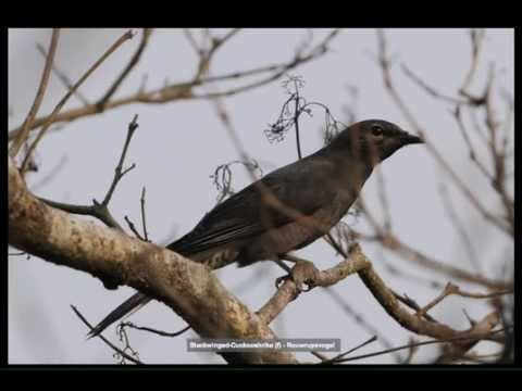 Bird pics of Northeast India