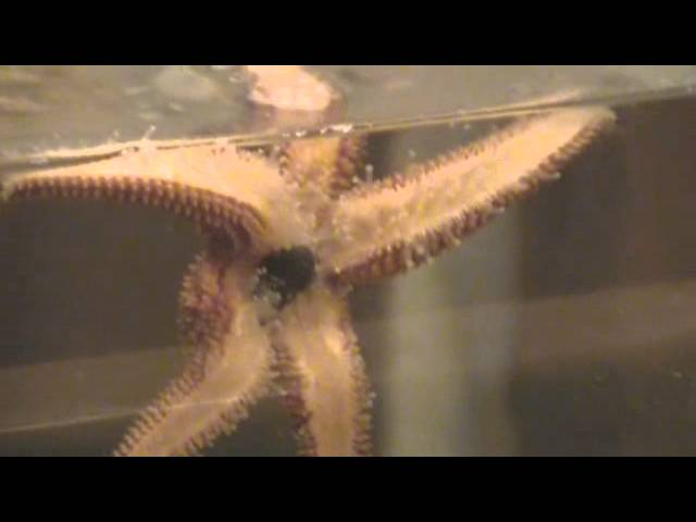 Lowcountry Estuarium Intro.wmv
