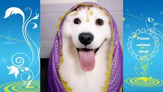 Funny cat and dog videos 2019🤣Funny animal vines