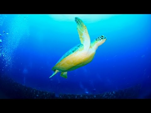 Shifts in Climate Shifting Sea Turtles