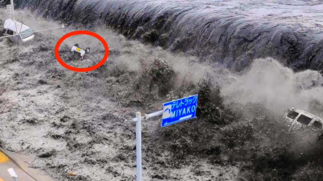 How to Survive a Tsunami picture