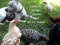 [Pit Bull & Chicks (4 months later) So Funny!*Love Me Tender*]